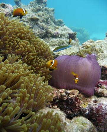 ダイビングツアー:サンゴに群がる魚