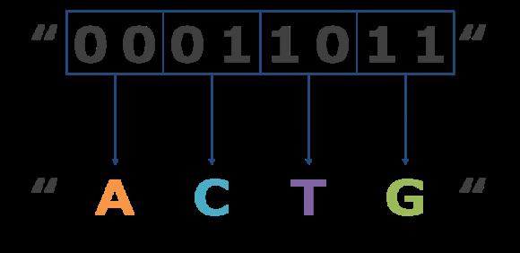 DNAストレージの仕組み