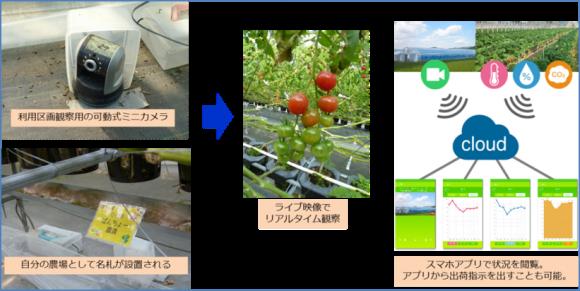 みつの里ジュリエッタの栽培とネットマーケティングの連携