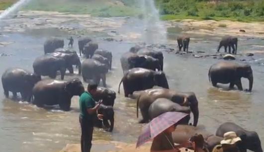 水浴びするゾウたち