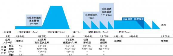 】高品質・良食味米生産のための水管理体系