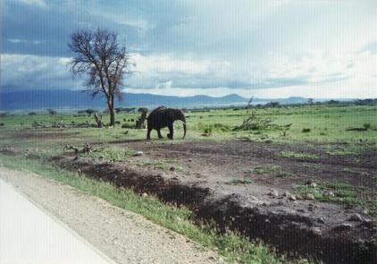 【写真10】ゾウ