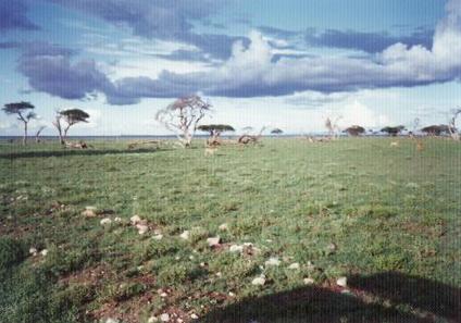 【写真11】どこまでも続く草原