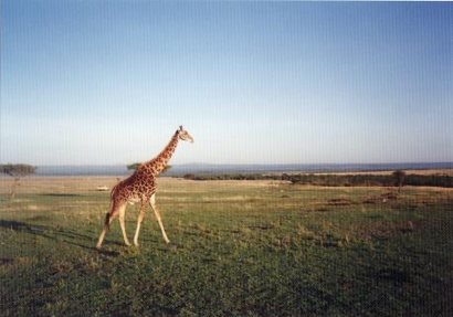 昔の世界の街角から:四半世紀前のケニアの サファリ