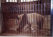 【写真17】杭州動物園のパンダ